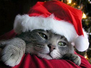 Christmas_Kitten