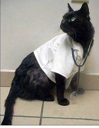 DoctorKat